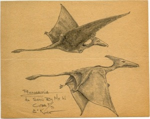 Kuhn's sketch of Cuban pterosaurs