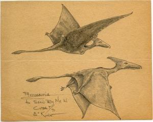 Kuhn's sketch of Cuban pterosaurs